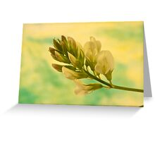 White Milkvetch Wild Flower Macro Greeting Card
