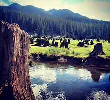 Field of Stumps in Tall Grasses by the Lake by JULIENICOLEWEBB