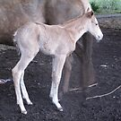 Newest arrival - another filly !!! by skyhorse