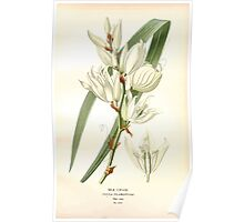 Favourite flowers of garden and greenhouse Edward Step 1896 1897 Volume 4 0163 Silk Grass Poster