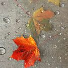 Autumn Leaf Dew by Zoe Marlowe
