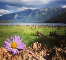Purple Daisy in a Field of Stumps  by JULIENICOLEWEBB