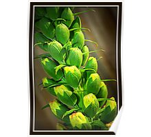Foxglove in bud Poster