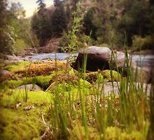 Tall Grass Beside the Riverbank by JULIENICOLEWEBB