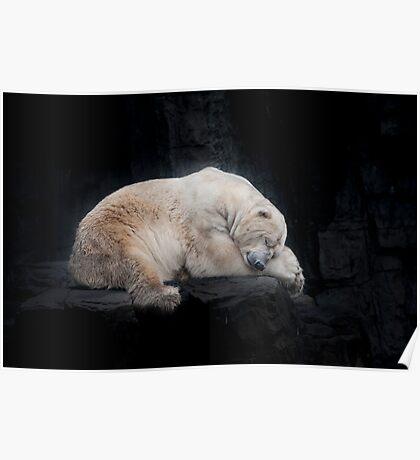 Sleeping Polar Bear Poster