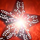 Festive Red Star Burst  by Tori Snow