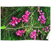 Pink Vine Flower Three Poster