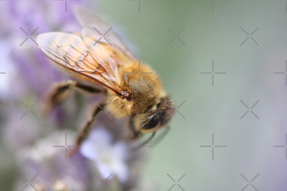 Soft on Bees by Joy Watson