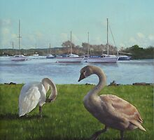 swans at christchurch harbour by martyee
