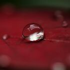 Silver Raindrop  by Kym Howard
