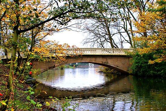 Stanley Park Bridge In Autumn by Sandra Cockayne