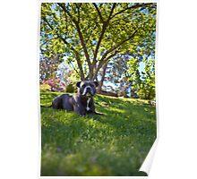 Spring Staffie Poster
