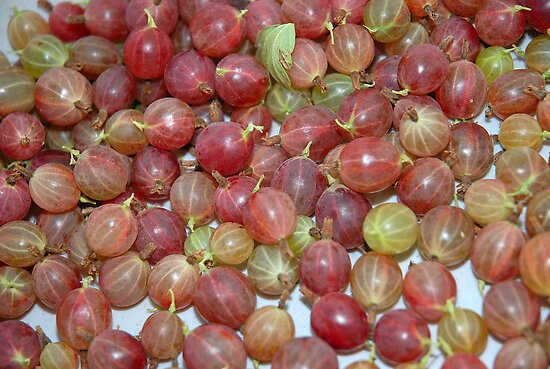Gooseberries by vbk70