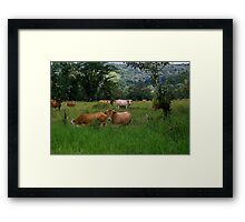 Grazing Cows Framed Print