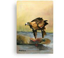 Eagle & road kill Canvas Print