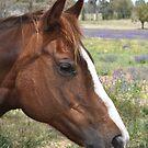 The chesnut mare again by julie anne  grattan