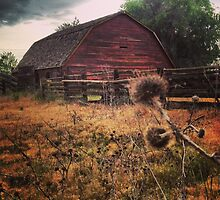 Rustic Red Barn surrounded by Thistles  by JULIENICOLEWEBB
