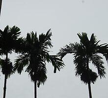 Silhouette-Betelnut Palms by gallerywaja