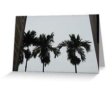 Silhouette-Betelnut Palms Greeting Card