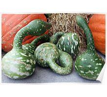 Green Stripe Pumpkins Poster