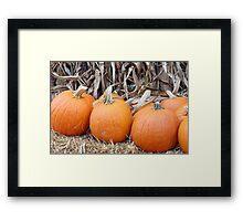 Orange pumpkins Framed Print