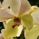 Singapore Orchids 3 by beeden