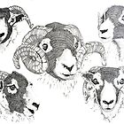 A Tup and His Ewes by Sue Nichol