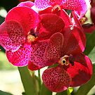 Singapore Orchids 5 by beeden