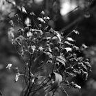 Summer Flowers and Memories IV by Lisa Dotzauer
