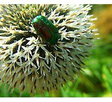 Scarab Green Photographic Print