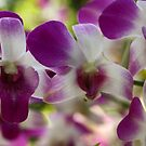 Singapore Orchids 9 by beeden