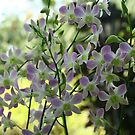 Singapore Orchids 10 by beeden