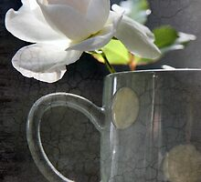 Morning Rose by Alison Malcolm Flower