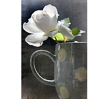 Morning Rose Photographic Print