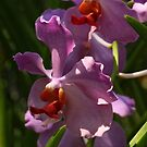 Singapore Orchids 12 by beeden