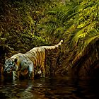 Tiger Pool by Tarrby
