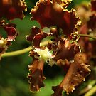 Singapore Orchids 14 by beeden