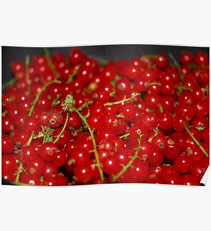 Red Currant Poster