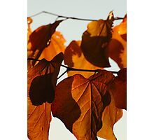 Stained Glass Autumn I Photographic Print
