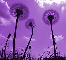Dandelions in Purple by Samantha Higgs