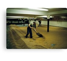 Maltsters turning malt in Langley Maltings, W. Midlands, 1980s Canvas Print