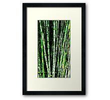Bamboo Grove-Structured Framed Print