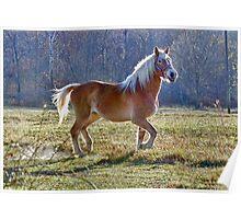 The Belgian Draft Horse Poster