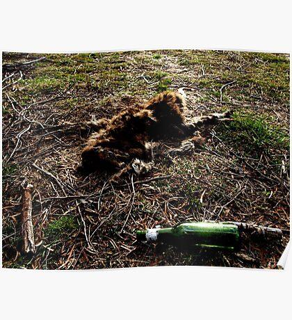 Dead Kangaroo with beer bottle Poster