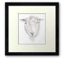 Sheep Graphite Drawing Framed Print