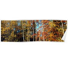 Bright autumn forest  Poster