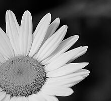 Daisy Sunshine (monochrome) by Scott Ruhs