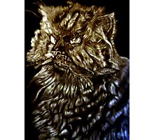Fur Ball-The Face of Fur Photographic Print