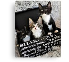 Kittens in a box Canvas Print