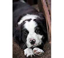 Sleeping Puppy Photographic Print